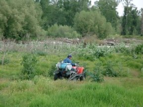 Chemical control for Scotch thistle near Yakima River, picture by J. Newquist